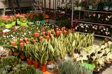 Marché dominical de la place du Miroir à Jette (Bruxelles) : Fleurs