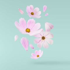 Beautiful flying pastel pink flowers
