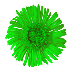 green wild flower isolated on white background. Flower bud close up.  Element of design.