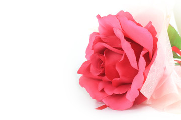 Beautiful Pink rose isolated flower love concept on white background