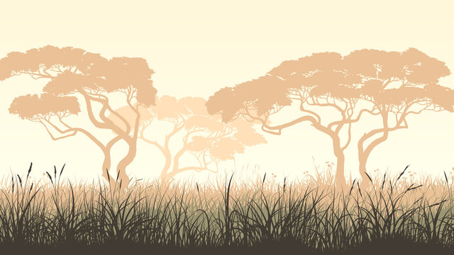 Horizontal illustration meadow grass and African acacia.