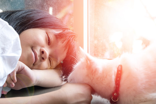 Selective focus on adorable Asia kid girl playing with Thai cat. Little happy Asian child lay down softly touching her pet at head.Love Your Pet Day.Random Acts of Kindness Week.Be kind to Animals