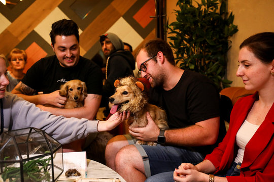 A Dachshund dog called Leo wears a lions mane as as sits with his owners at a pop-up Dachshund cafe in London