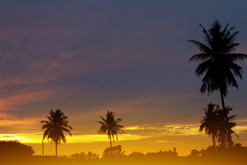Silhouette of Coconut tree under gold sky on the beach.