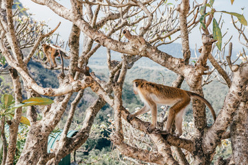 monkey is climbing in a tree