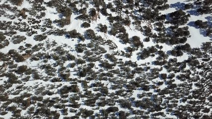 Wall Mural - Aerial view of the snow-capped Atlas mountains covered with forest in Morocco at winter, 4k