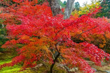 京都の秋 東山の鮮やかな紅葉