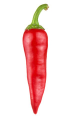 Canvas Prints Hot chili peppers One Red hot chili pepper isolated on white background