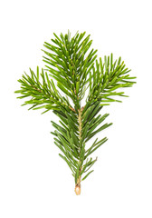 Christmas tree pine branches isolated white background