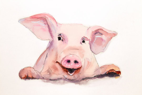 Cute pink pig face. Hand painted watercolor illustration on white background. Symbol of New Year 2019.