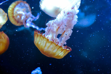 Méduse en plaine mer