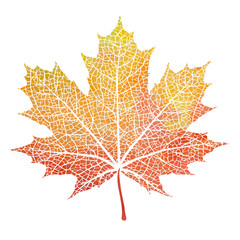 Watercolor maple autumn leaves, paint  texture, vector