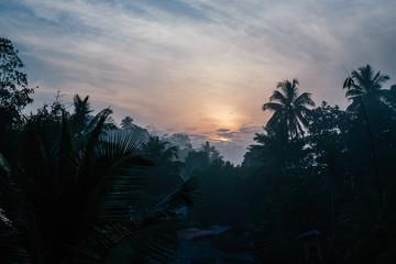 sunset in a jungle