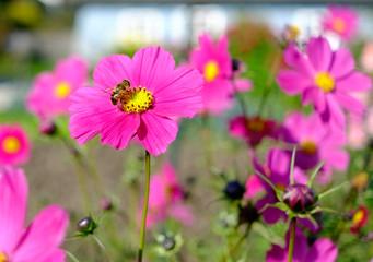 Bienen auf der Blüte