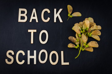 Back to school concept. Top view banner autumn dry leaves over classroom blackboard background