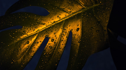 Tropical leaves, neon light, dark background, close-up