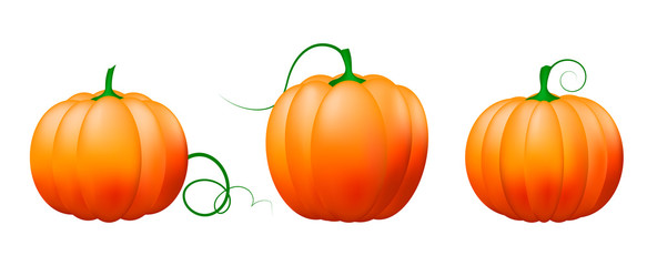 Pumpkin icon set,Vector vegetables.