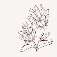 Vector flower. Floral card. Wild flower. Element for design. Hand-drawn contour lines and strokes.