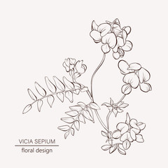 Floral card. Wild flower. Element for design. Hand-drawn contour lines and strokes.