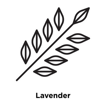 Lavender icon vector isolated on white background, Lavender sign , thin line design elements in outline style