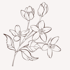 Branch with flowers. Element for design. Hand-drawn contour lines and strokes.