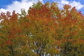 Bright foliage against sky with clouds, autumn park