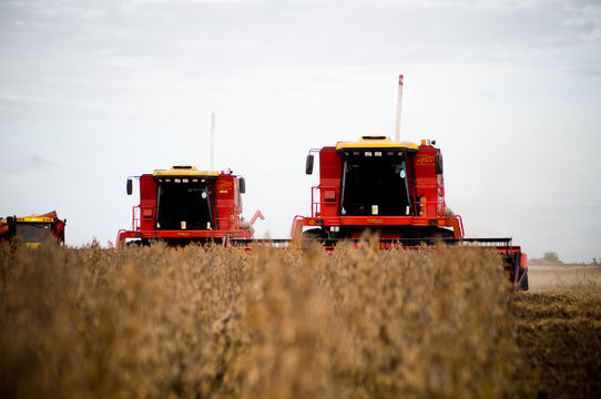 Soybean harvest in Argentina