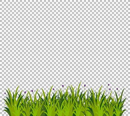 Green grass for decoration on transparent background
