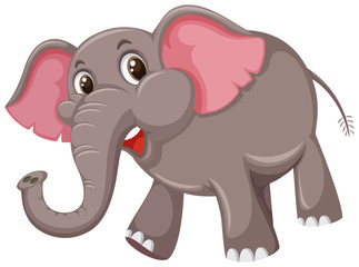 A cute elephant on white backgrond
