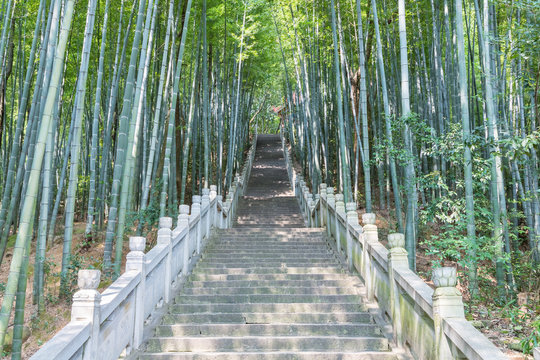 steps and bamboo forests