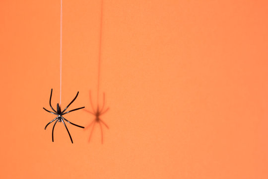 Halloween background concept. Black spider shadow and silhouette hanging on web on orange background