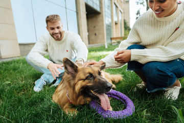 Smiling woman. Smiling dark-haired woman wearing light sweater playing with her dog sitting near her man