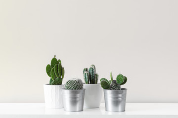 Fototapeta Modern room decoration. Various cactus house plants in different pots against white wall. Cactus mania concept with copy space. obraz