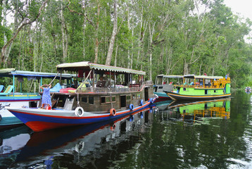 Klotok, river boats on Sekonyer river, Indonesia