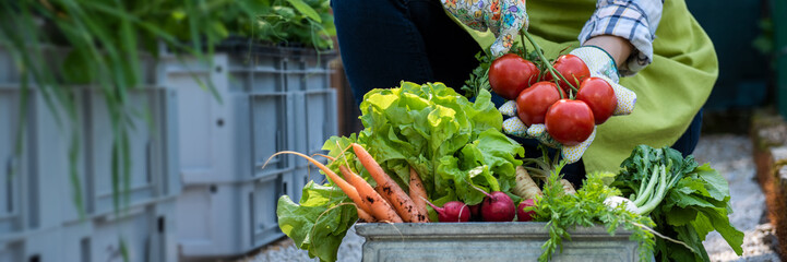 Unrecognisable female farmer holding crate full of freshly picked vegetables in her garden. Homegrown bio produce concept. Sustainable farm concept banner. Wall mural