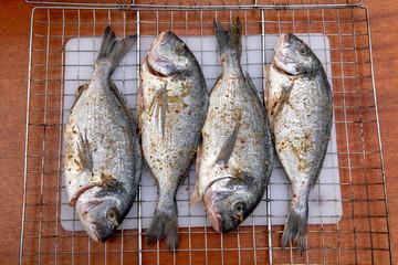 Marine fish Dorado