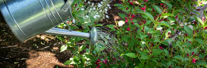 Fototapeta Watering flowerbed using watering can. Gardening hobby concept banner. obraz