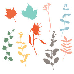 Botanical illustration with herbs, plants, flowers and leaves. Isolated vector silhouettes on white background. Graphic design for background, card, web banner, poster, invitation.