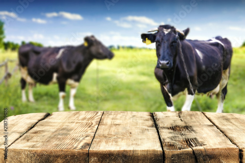 Wall mural Desk of free space and rural landscape with cows.