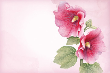 Watercolor illustration of a mallow flower. Perfect for greeting cards and invitations
