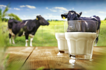 Fototapeta Desk of free space and milk with cows.  obraz
