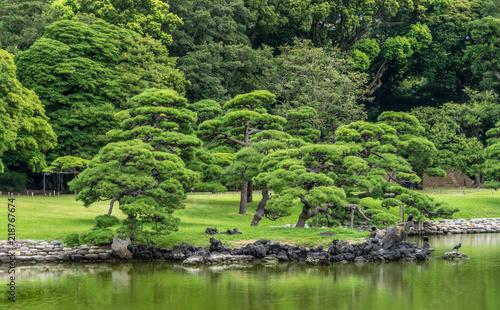 Panoramic view of old japanese pine tree reflections at Hamarikyu ...