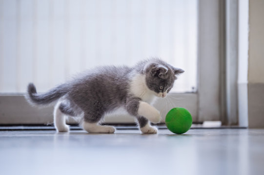 The kitten is playing with a ball