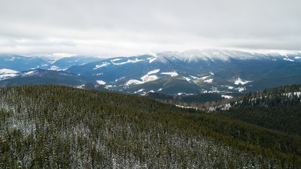 Aerial view of the snow-covered pine branches