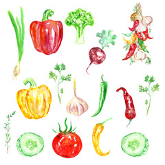 Watercolor hand drawn vegetables. Eco food vegetables background. Paprica, tomato, pepper, garlic, parsley isolated on white background.
