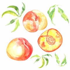 Watercolor hand drawn fresh ripe fruit peach. Watercolor illustration of whole and half peach with leaves isolated on white background.