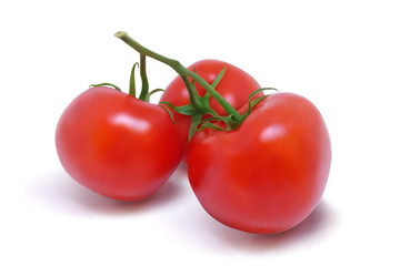 Three ripe red tomatoes on a branch. Photo-realistic vector illustration on a white background.