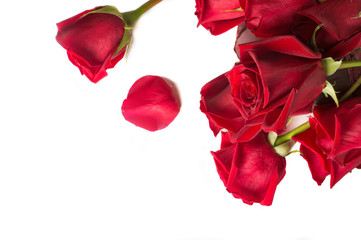 bouquet of red roses aroundwhite background