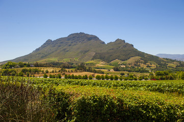 Mountains and vineyards South Africa