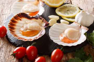 Raw sea scallops in a shell and vegetables for cooking close-up. horizontal